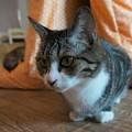 Photos: コンパクト猫