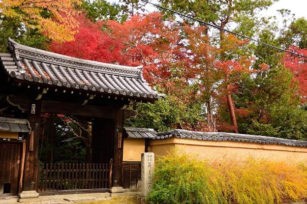 Photos: 迎称寺