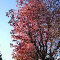 写真: 秋の空2