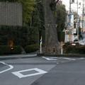 Photos: 道路の真ん中にある巨木