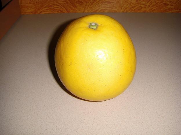えふでもらったグレープフルーツ