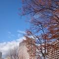 Photos: 雨後の青空
