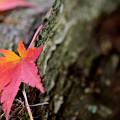 富士見高原の紅葉3