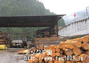 材木見学4