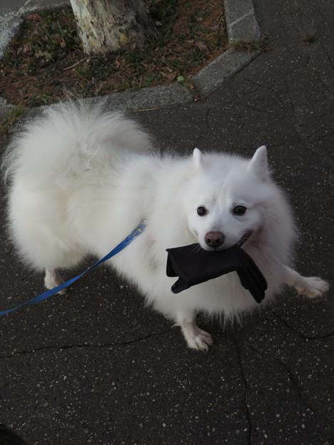 早朝散歩_手袋奪ったり!