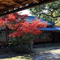 六華苑 庭園の紅葉 IMG_0536_2