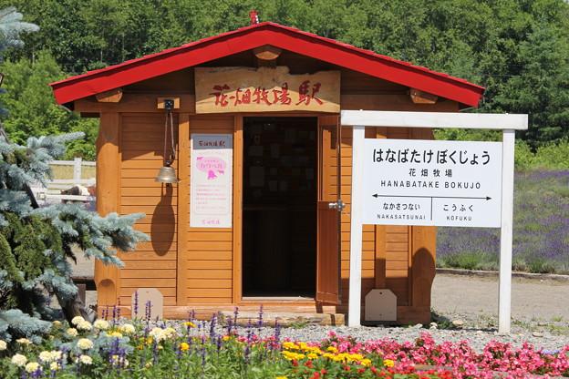 花畑牧場2