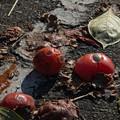 柿を求め気ままな散策 2