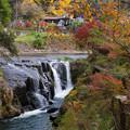 Photos: 鍋釜滝から大イチョウを眺める