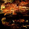 写真: 紅葉ライトアップ