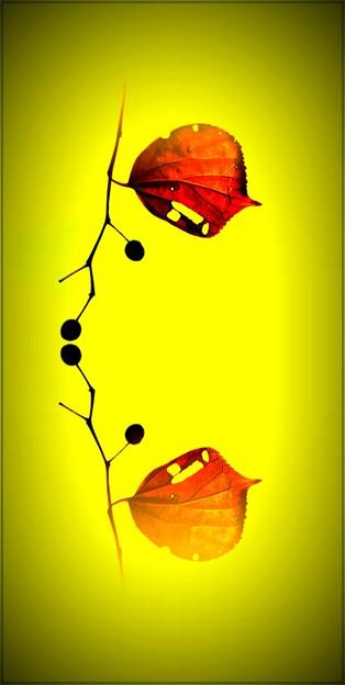 Photos: 秋の贈りもの、あなたへ。