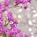 Photos: 春のきらめき。