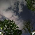 Photos: 夜の公園 (魚眼)