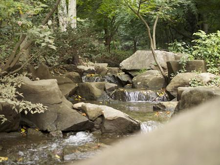 湧き水の小川
