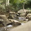 Photos: 湧き水の小川