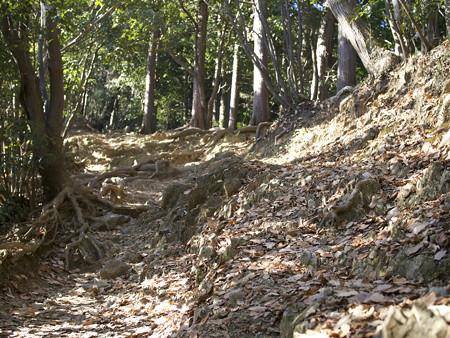 木漏れ日の山道(1)