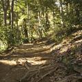Photos: 山道へ