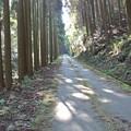 Photos: こうち滝への道 (3)