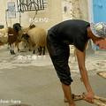 順番待ち中の羊たち