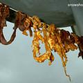 Photos: 干し羊肉