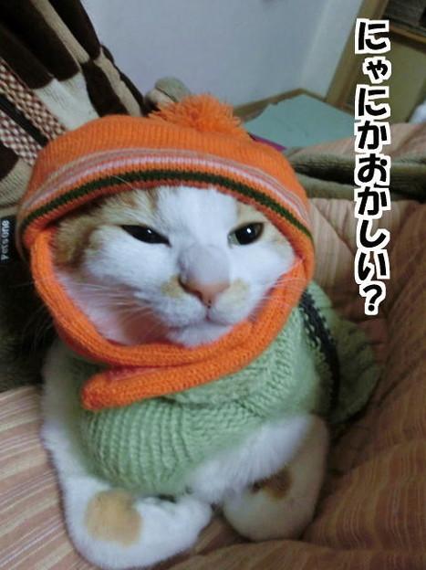 猫のくせにニット帽とセーター