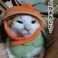 Photos: 猫のくせにニット帽とセーター