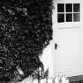 Photos: White&Green