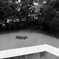 Photos: 庭に大きな亀が