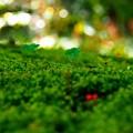 Photos: Miniature World