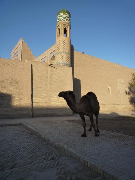 シルクロード イチャン・カラの秋 Itchan Kala in autumn *アザーンの聞こゆる方に向いたまま日陰の駱駝動くともなし