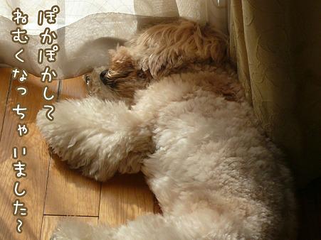101109_koo_sleeping