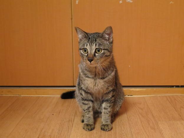 Photos: 待ち