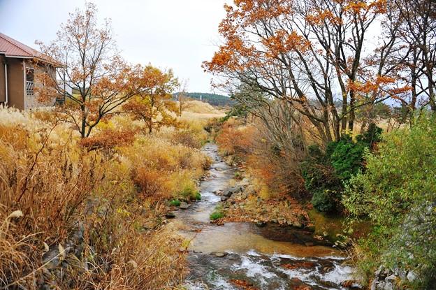 タデ原湿原 秋の彩
