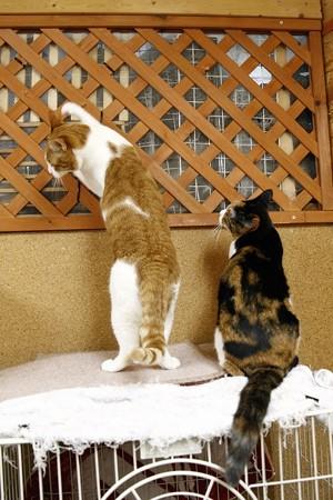 バジル「ママ、何してるの?」 オリーブ「えっ・・・別に・・・」