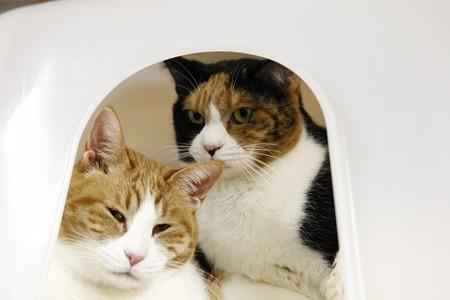 オリーブ&バジル「・・・家族の肖像?」