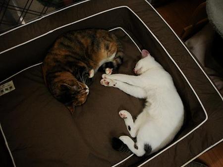 タカラ「一緒に寝ようねー」 ミケコ「もの好きネェ」