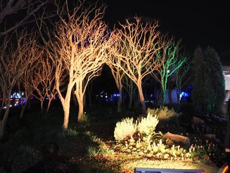 長居植物園ガーデンイルミネーション15
