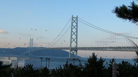 明石海峡大橋14 鳥の群れ 立つ
