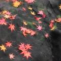 岩、燃ゆる秋