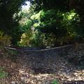 写真: 竹林探しました