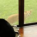 写真: 常連外猫