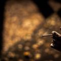 落葉と煙草@与野