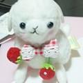 写真: アルパカ可愛いよね(*´∀`)