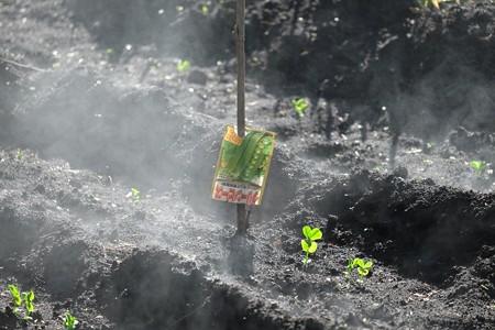 2014.11.21 追分市民の森 天空の畑に朝日