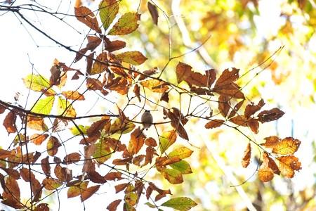 2014.12.08 瀬谷市民の森 エナガの居る光景