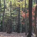 Photos: 2014.12.08 瀬谷市民の森 散歩道