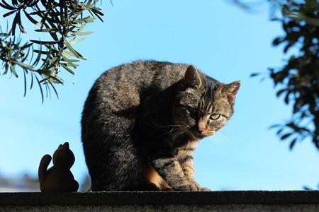 2015.01.03 追分市民の森 門柱の猫