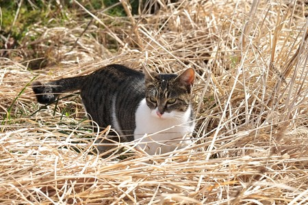 2015.02.21 和泉川 草原で猫