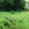 Photos: 2010.06.24 和泉川 写生