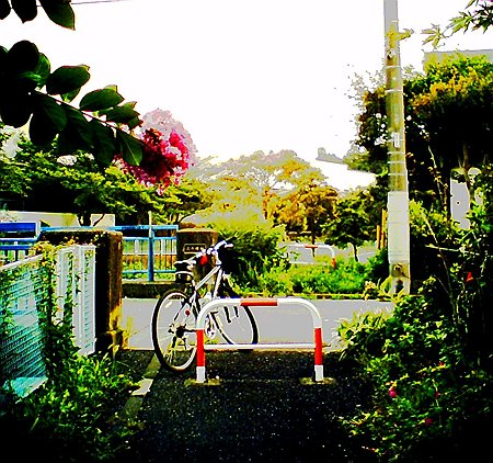 2010.08.15 和泉川 百日紅と愛車 ノイズモードSQ30m